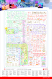 Metabolic pathways, plakat 82 x125 cm